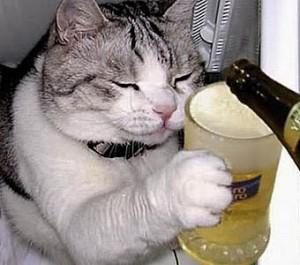 beer-cat-8